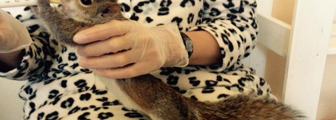 Squirrel friendly rescue near London